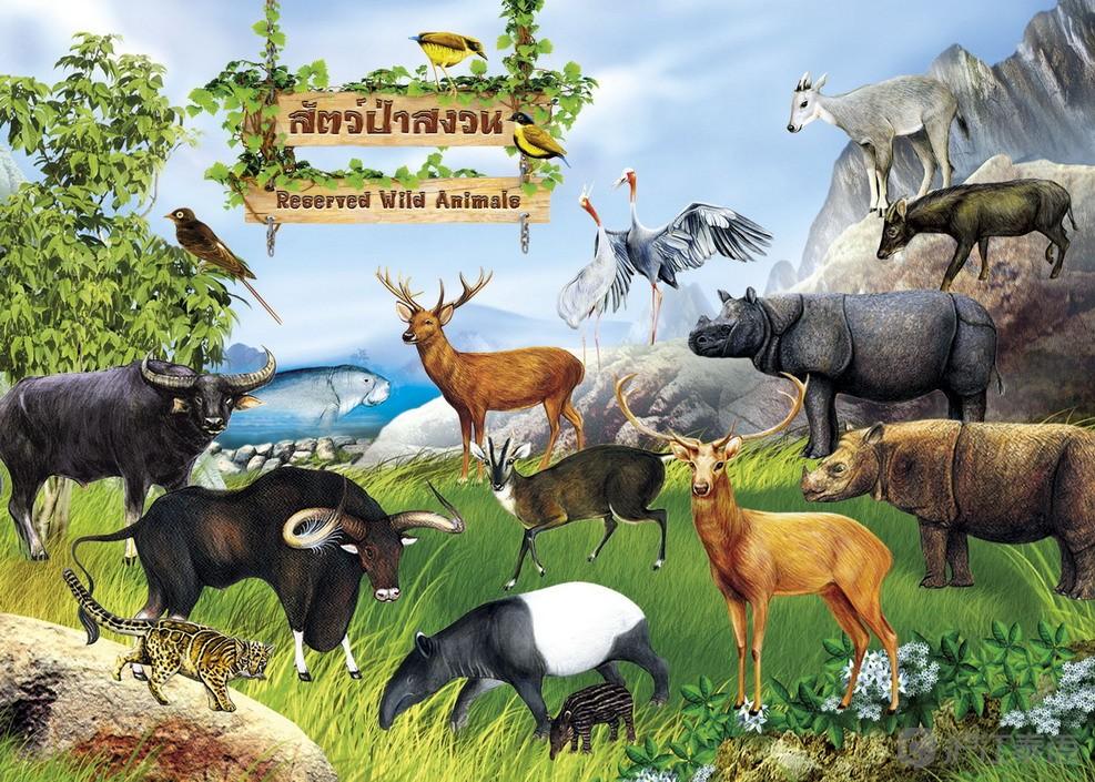 泰语词汇学习:关于动物分类