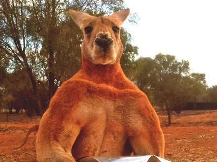 澳洲动物英文小报