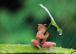 日常西语必备:天气情况表达