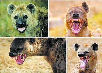 那些与动物有关的趣味西班牙谚语(下)