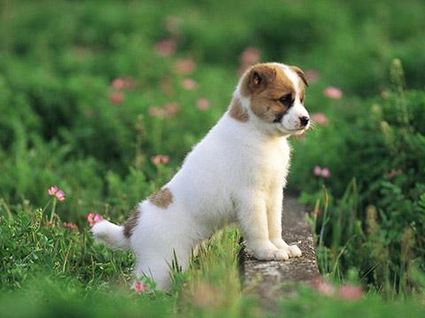 思维导图_萌物集中营:最适合家养的宠物狗排行榜top