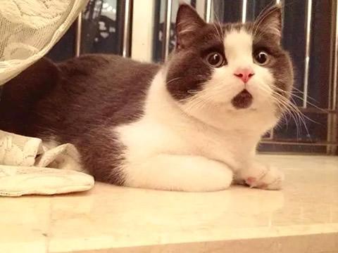 萌猫咪图片大全-ipad墙纸图片大全超清,熊猫图片大全,可爱猫咪图片