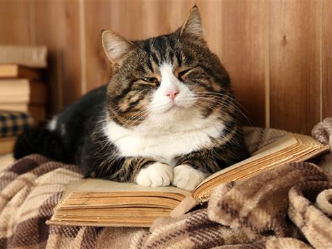 与动物看书有关的图片