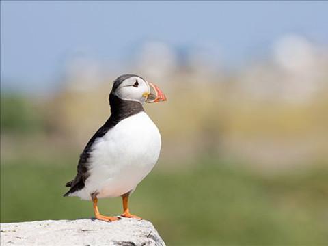 涨姿势了,原来鸟类名字是这样来的…